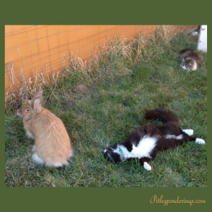 Cats n Rabbits 01